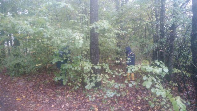 На Костопольщіні рятувальники шукають жінку яка заблукав під час збирання грібів