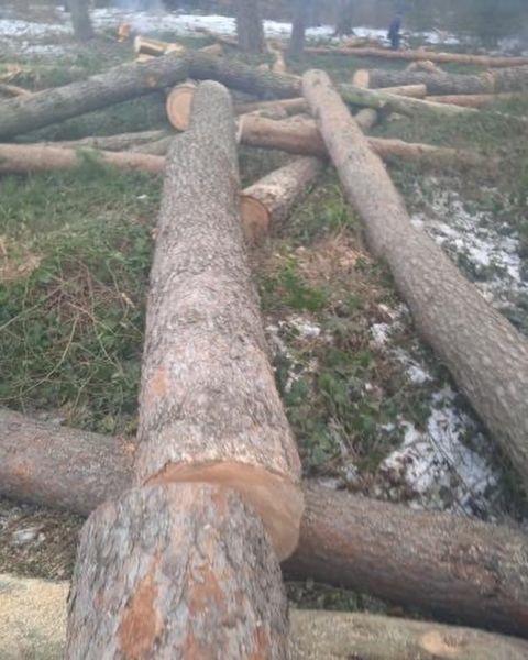 У Козліні зафіксувалі Вирубка дерев (ФОТО / ВІДЕО)