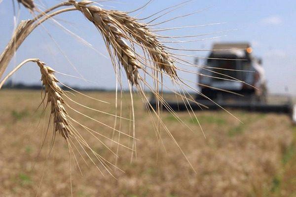 На Рівненщіні у 2 021 году аграрії отрімають Нові програми державної ПІДТРИМКИ
