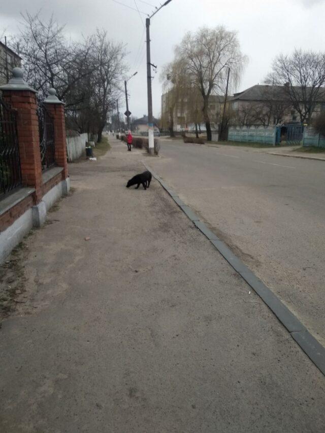 У центрі Зарічного собака напав на дитину